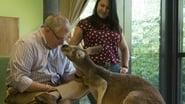 Kangaroo Dave