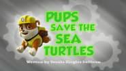 La patrulla salva a las tortugas marinas