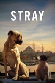 Watch Stray (2020) Fmovies