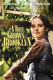 Un albero cresce a Brooklyn 1945