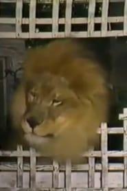 Zamba The Lion