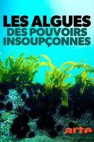 Les algues : Des pouvoirs insoupçonnés