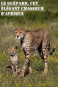 Le guépard, cet élégant chasseur d'Afrique