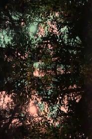 Imitación de la luz (2020)