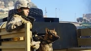 Megan Leavey images
