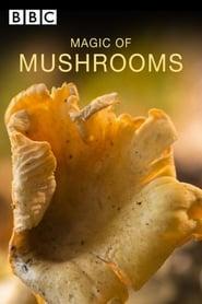 The Magic Of Mushrooms 2014