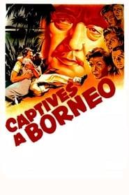 Captives à Bornéo 1950