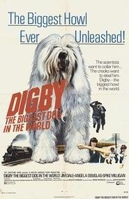 Tobia il cane più grande che ci sia 1973