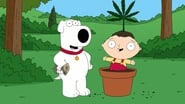 Family Guy Season 7 Episode 12 : 420