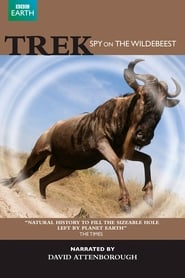 Trek - Spy on the Wildebeest 2007