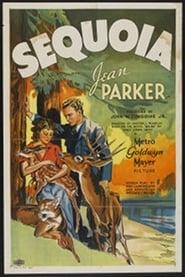 Affiche de Film Sequoia