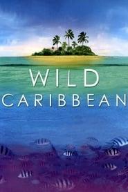 Wild Caribbean 2007