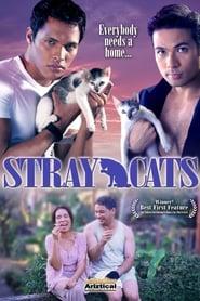 Stray Cats 2005