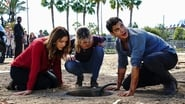 Scorpion Season 4 Episode 11 : Who Let the Dog Out ('Cause Now It's Stuck in a Cistern)