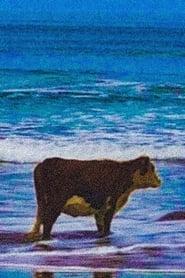 COW TV
