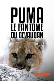 Puma, le fantôme du Gévaudan 2019