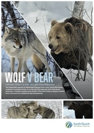 Wolf vs Bear (2019)