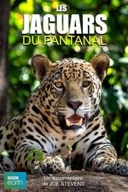 Les jaguars du Pantanal 2016