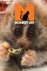 Monkey Life 2007