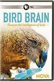 مشاهدة الوثائقي NOVA: Bird Brain 2021 مترجم