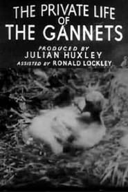 The Private Life of the Gannets 1934