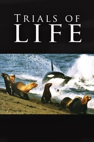 Poster The Trials of Life 1990