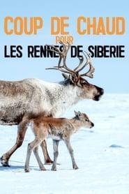 Coup de chaud pour les Rennes de Sibérie (2020)