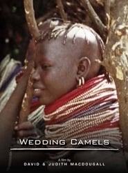 The Wedding Camels