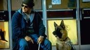 Kutyám, Jerry Lee 3.