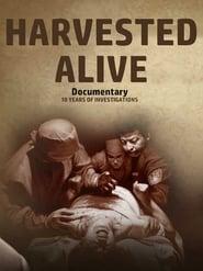 Harvested Alive