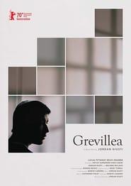 Grevillea