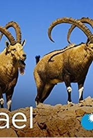 Serial Online: Wild Israel (2016), serial Documentar online subtitrat în Română