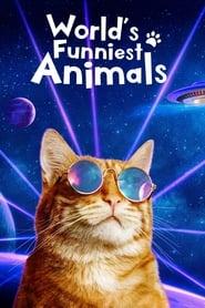 World's Funniest Animals 2020