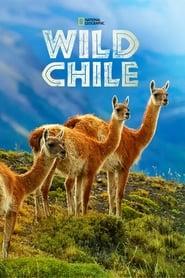 Wild Chile 2018
