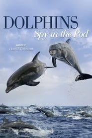 Dolphins: Spy in the Pod 2014