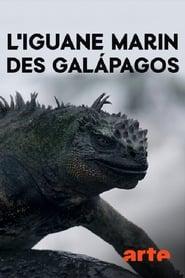Drachenrätsel – Die verschwundenen Meerechsen von Galapagos