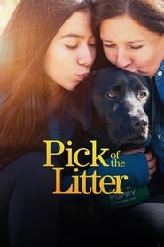 Pick of the Litter: 1 Staffel