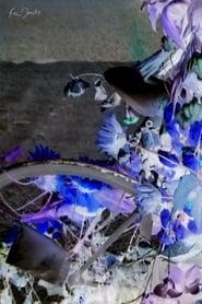 Flowers and Bike (2020)