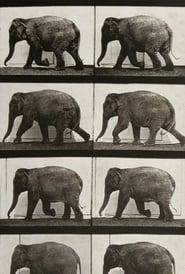 Elephant Walking 1887