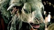 EUROPESE OMROEP   Black Sheep