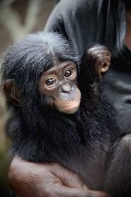 En danger : menaces sur les grands singes (2021)