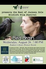 Bird Brain (2012)