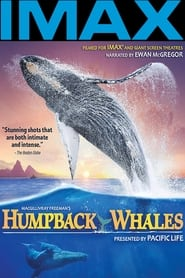 Humpback Whales 2015