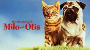 Le avventure di Milo e Otis immagini