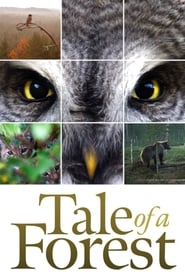 Tale of a Forest (2012)