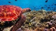 Our Planet - Season 1 Episode 4 : Coastal Seas