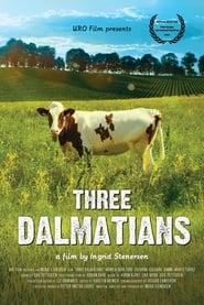 Tre dalmatinere 2014