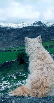 مشاهدة فيلم Histories of Wolves مترجم