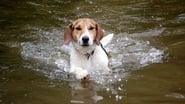 Shiloh, un cucciolo per amico