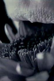 مشاهدة فيلم straightbut 1997 مترجم أون لاين بجودة عالية